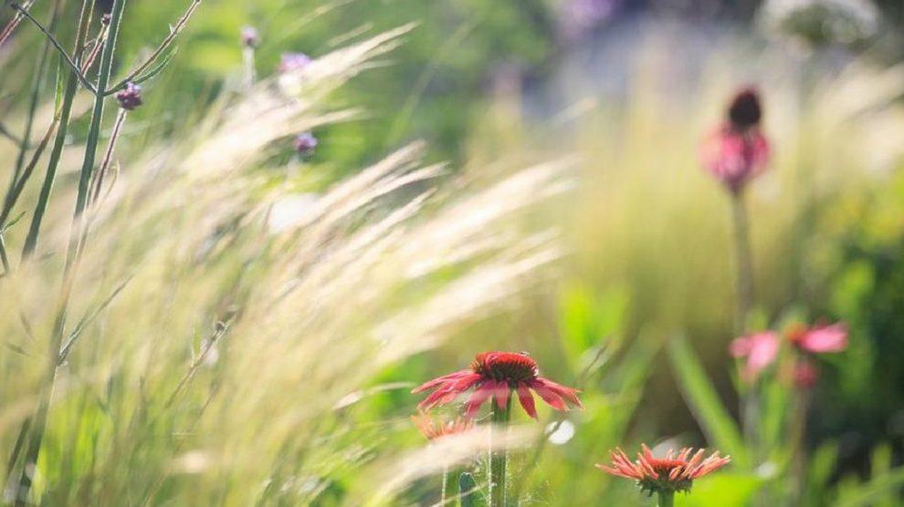 biljke za srce